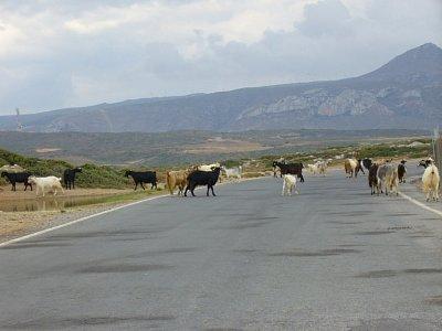 Kozy na procházce