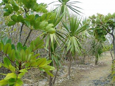 Vegetace na ostrově
