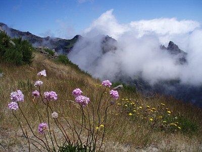 Cesta na Pico Ruivo - Všudypřítomné barevné květiny lemují výstup na Pico Ruivo (nahrál: Tomas)