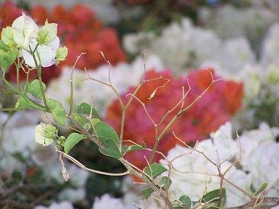 rostliny (nahrál: admin)