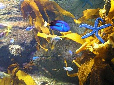 Akvárium (nahrál: admin)
