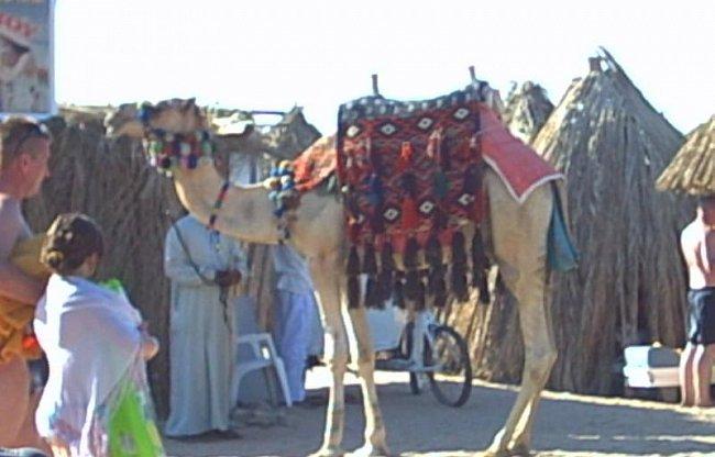 Mé zážitky z Egypta