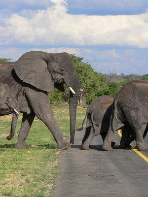 Autem napříč Botswanou