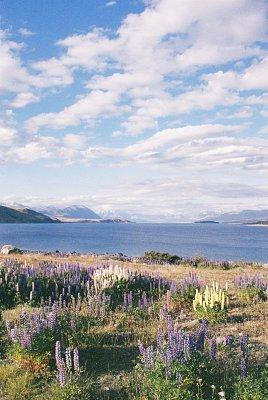 Jezero Tekapo (nahrál: admin)