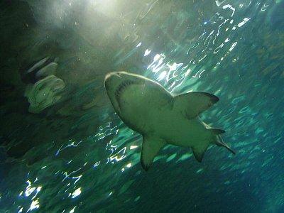 V akváriu (nahrál: Jechort)