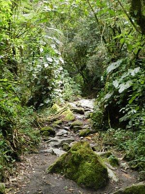 Vallé de Cocora, Quindió, Kolumbia