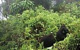Gorily v mlze aneb 10 míst ve Rwandě, která musíte navštívit